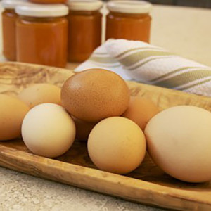 OPT_Eggs