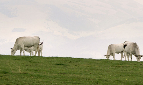 Outing: Monte Pennino da Bagnara