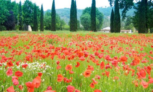 Best of Umbria Tours
