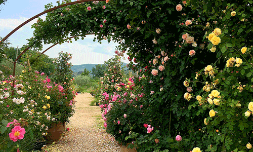 Glorious Gardens in the Heart of Italy